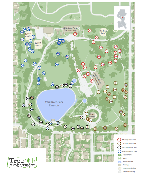 color-rendered site plan of park with symbols and numbers noting tree locations. Graphic provided by Tree Ambassador