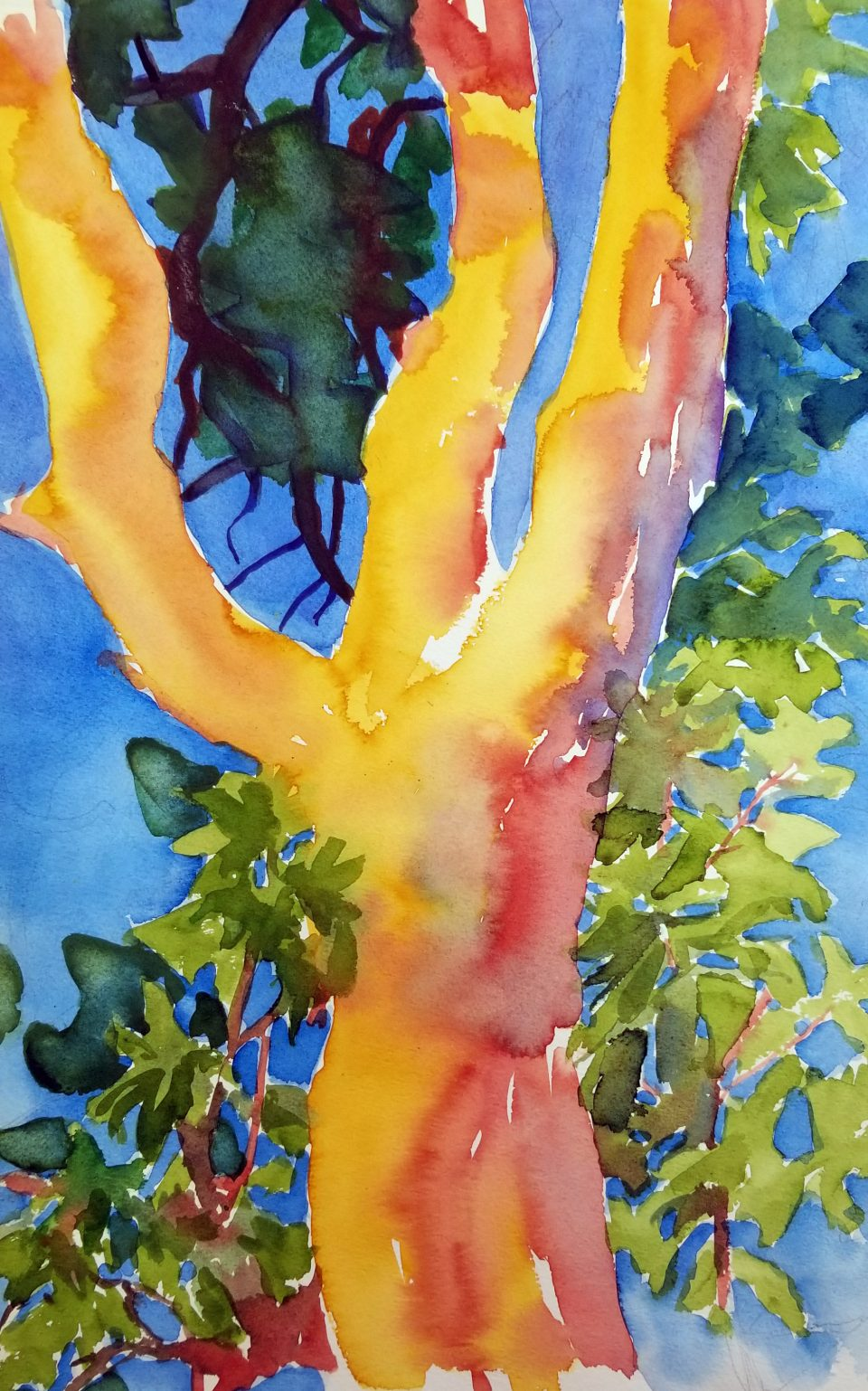 watercolor of orange, red and gold-colored madrone tree trunk against blue sky.