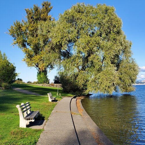 photo of benches, lawn and sidewalk lining lake with large willow in background shore