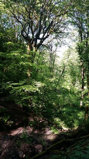 photo of deciduous forest in summer