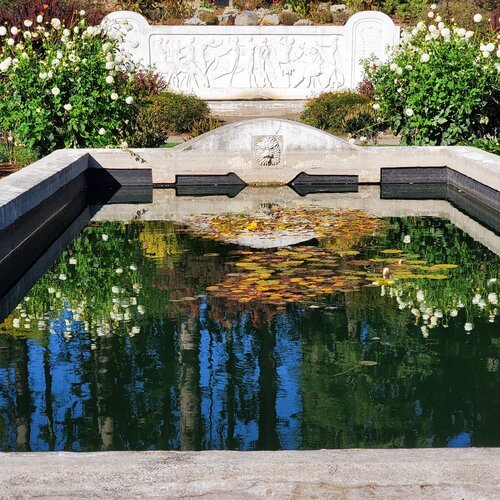 rectangular pool with reflection of sky and flowers