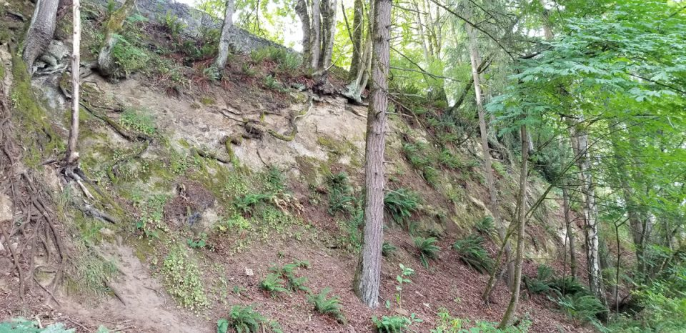 photo of sheer wooded slope