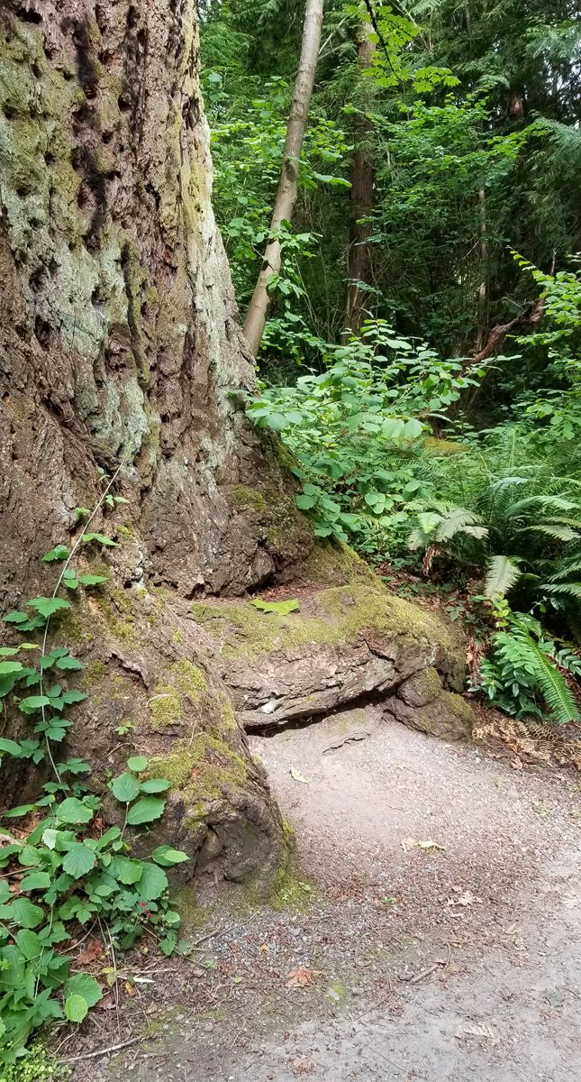 photo of base of large tree