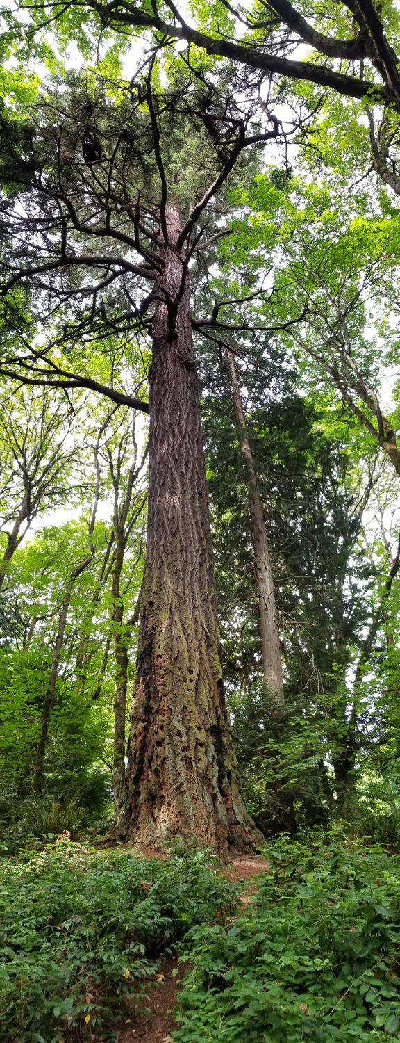 photo of tall tree