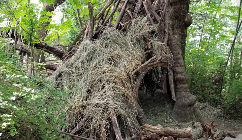photo of kids' fort built around base of large tree