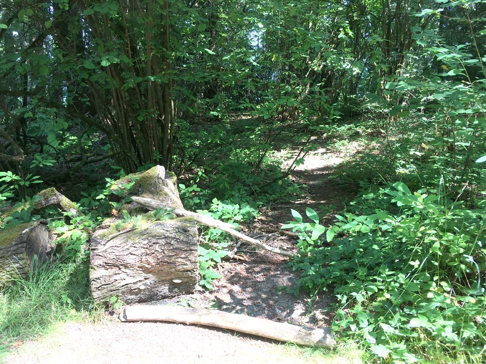 photo of logs and branches blocking path